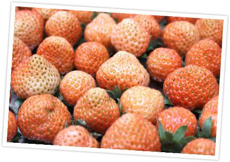 収穫された桃薫